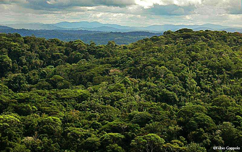 Parque Estadual da Serra do Condurú. Foto: Fábio Coppola